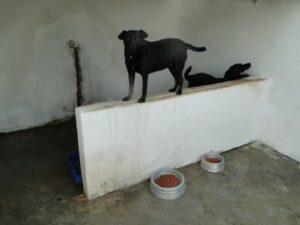 Conheça a Ong: Cão Sem Dono 10