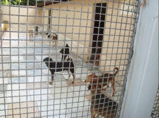 Conheça a Ong: UIPA – União Internacional  Protetora dos Animais 6