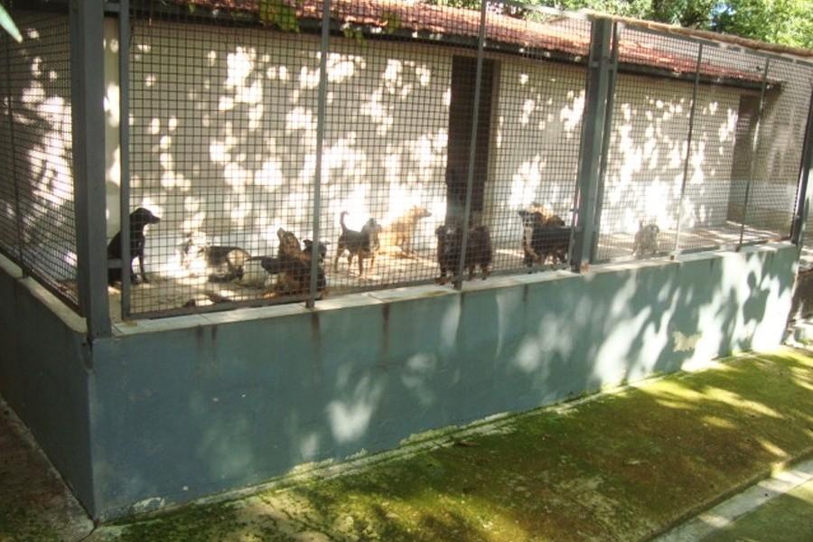 Conheça a Ong: UIPA – União Internacional  Protetora dos Animais 4