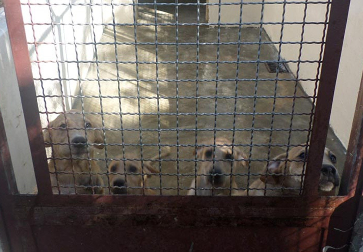 Conheça a Ong: UIPA – União Internacional  Protetora dos Animais 1