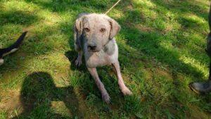 Conheça a Ong: Cão Sem Dono 12