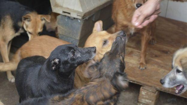 """A """"epidemia de abandono"""" dos animais de estimação na crise do coronavírus 4"""