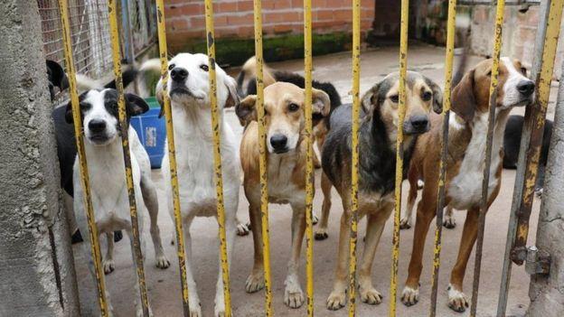"""A """"epidemia de abandono"""" dos animais de estimação na crise do coronavírus 3"""