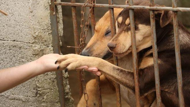 """A """"epidemia de abandono"""" dos animais de estimação na crise do coronavírus 2"""