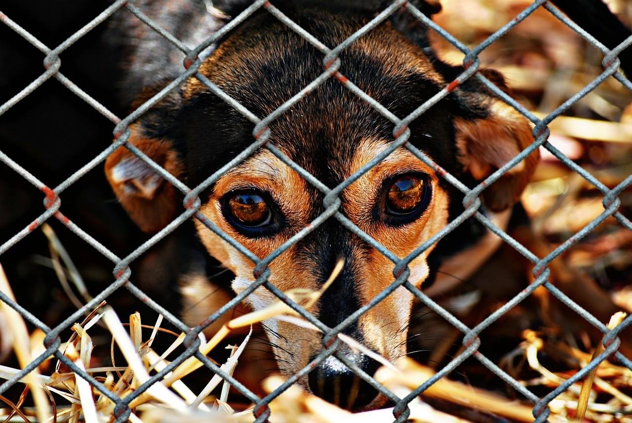 """A """"epidemia de abandono"""" dos animais de estimação na crise do coronavírus 1"""