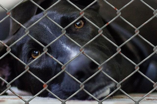 """A """"epidemia de abandono"""" dos animais de estimação na crise do coronavírus 7"""