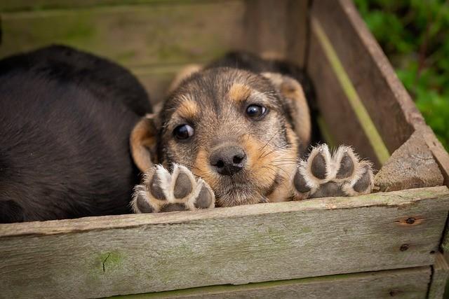 """A """"epidemia de abandono"""" dos animais de estimação na crise do coronavírus 5"""