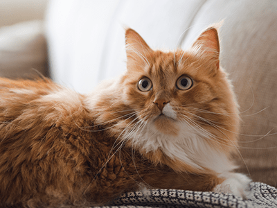 7 barulhos que deixam um gato assustado 5