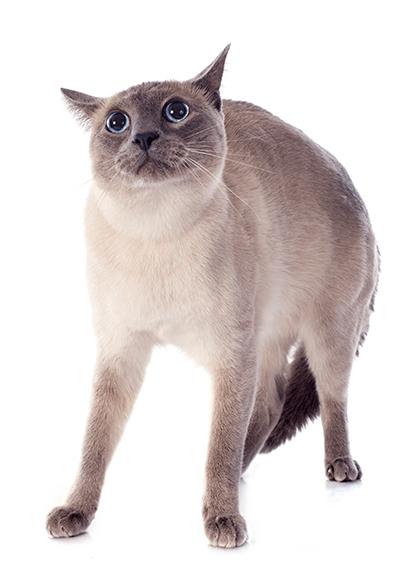 7 barulhos que deixam um gato assustado 7