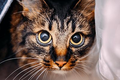 7 barulhos que deixam um gato assustado 8