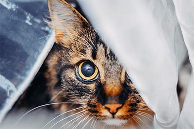 7 barulhos que deixam um gato assustado 3