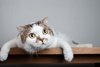 7 barulhos que deixam um gato assustado 4