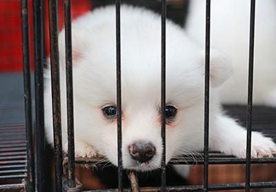 Cruzar ou não? Você faz questão de ter um cão de raça? 8