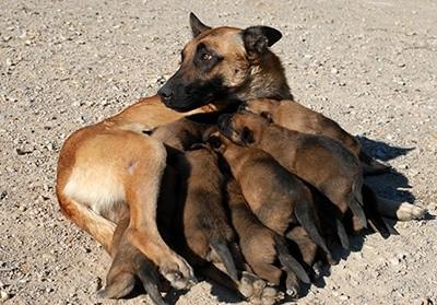 Cruzar ou não? Você faz questão de ter um cão de raça? 5