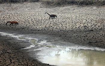 Pantanal sofre a maior devastação de sua história enquanto voluntários lutam para salvar os animais 9