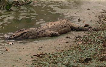 Pantanal sofre a maior devastação de sua história enquanto voluntários lutam para salvar os animais 6