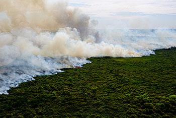 Pantanal sofre a maior devastação de sua história enquanto voluntários lutam para salvar os animais 5