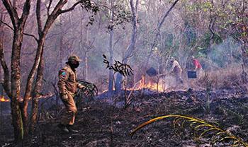 Pantanal sofre a maior devastação de sua história enquanto voluntários lutam para salvar os animais 3
