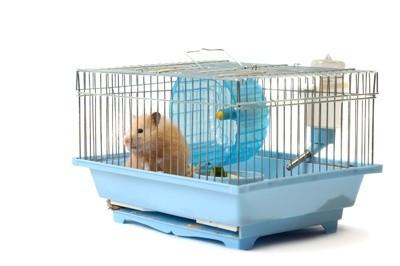 Tudo o que você precisa saber sobre Hamsters: Características, cuidados, dicas e curiosidades 5