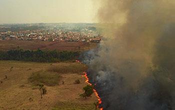 Pantanal sofre a maior devastação de sua história enquanto voluntários lutam para salvar os animais 7