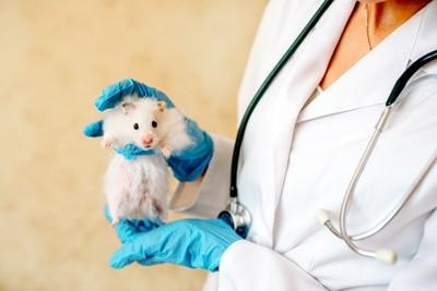 Tudo o que você precisa saber sobre Hamsters: Características, cuidados, dicas e curiosidades 15