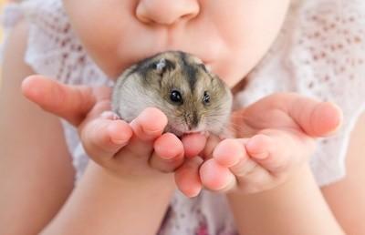 Tudo o que você precisa saber sobre Hamsters: Características, cuidados, dicas e curiosidades 14
