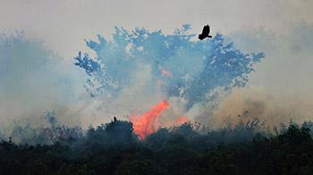 Pantanal sofre a maior devastação de sua história enquanto voluntários lutam para salvar os animais 10