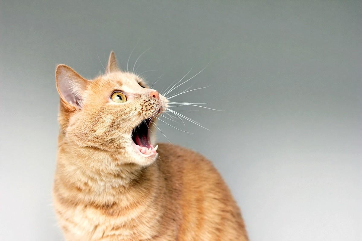 7 barulhos que deixam um gato assustado 1