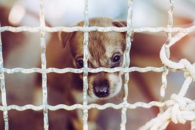 Cruzar ou não? Você faz questão de ter um cão de raça? 4
