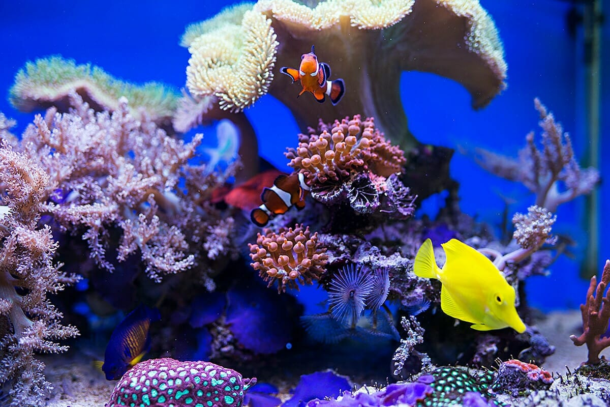 Tudo o que você precisa saber antes de ter um aquário de água salgada 1