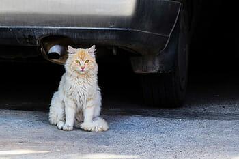 6 mitos pra fazer você desistir de deixar seu gato sair sozinho 3