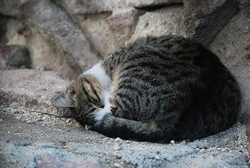 6 mitos pra fazer você desistir de deixar seu gato sair sozinho 7