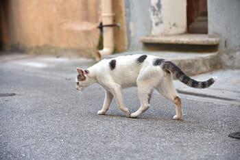 6 mitos pra fazer você desistir de deixar seu gato sair sozinho 5