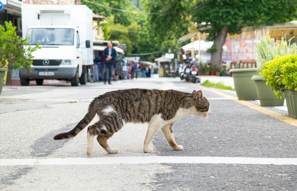 6 mitos pra fazer você desistir de deixar seu gato sair sozinho 1