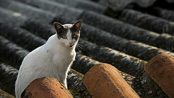 6 mitos pra fazer você desistir de deixar seu gato sair sozinho 4