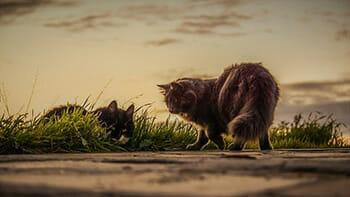 6 mitos pra fazer você desistir de deixar seu gato sair sozinho 6