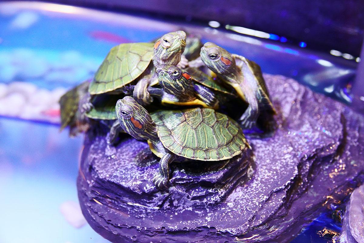 Aquaterrário: O Habitat Ideal para Tartarugas de Aquáticas 1
