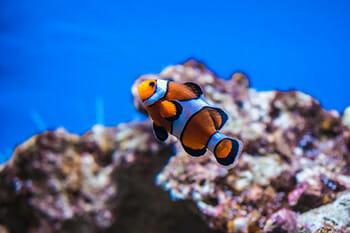Tudo o que você precisa saber antes de ter um aquário de água salgada 4