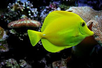 Tudo o que você precisa saber antes de ter um aquário de água salgada 2