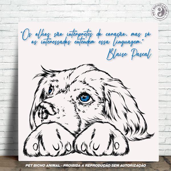 Azulejo Decorativo - Olhar de um Cão 1