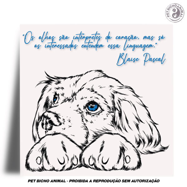 Azulejo Decorativo - Olhar de um Cão 2