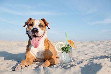 Cachorros sofrem com o calor: conheça as mudanças de comportamento mais comuns no verão e os cuidados para manter seu cão fresquinho 6