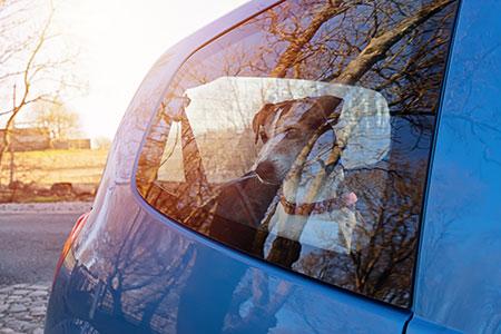 Cachorros sofrem com o calor! Cuidados e atenção! 8