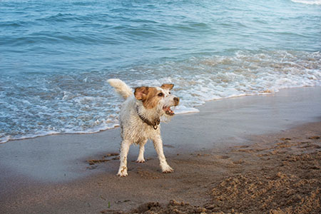 Cachorros sofrem com o calor! Cuidados e atenção! 3