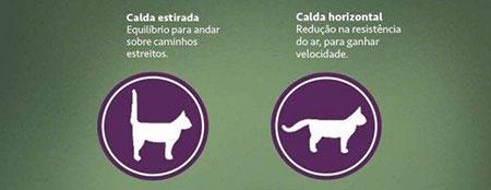 Gatos: por dentro e por fora 4