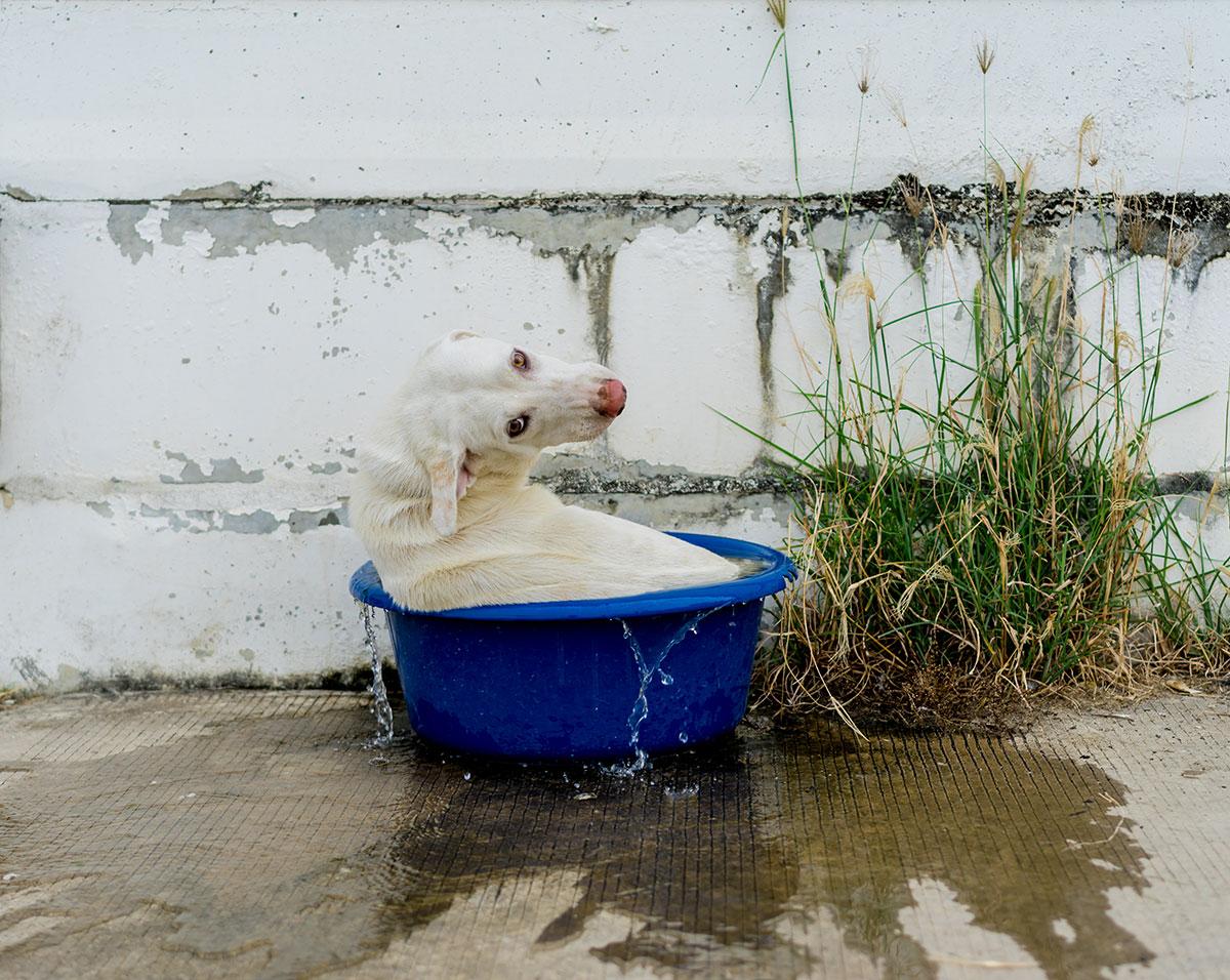 Cachorros sofrem com o calor! Cuidados e atenção! 1