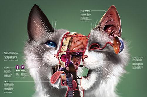 Gatos: por dentro e por fora 6