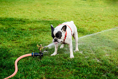 Cachorros sofrem com o calor! Cuidados e atenção! 9