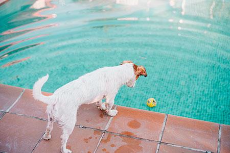 Cachorros sofrem com o calor! Cuidados e atenção! 10