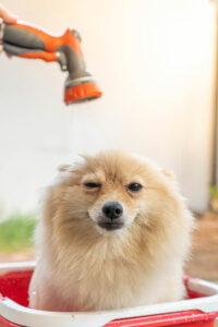 Cachorros sofrem com o calor! Cuidados e atenção! 5